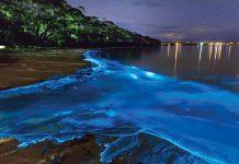 دریای ستارگان مالدیو