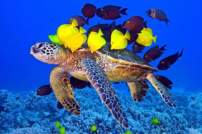 لاک پشتهای دریایی کیش - جاهای دیدنی کیش