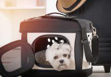 حمل حیوان خانگی در هواپیما